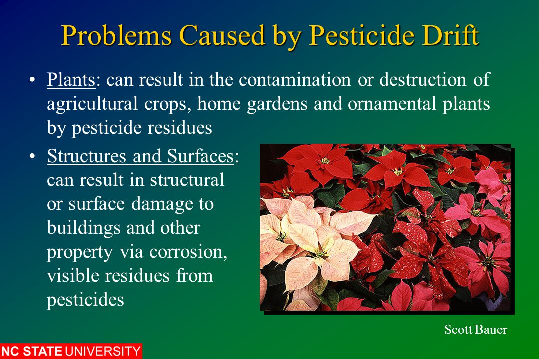 Problems Caused by Pesticide Drift Plants: can result in the contamination or destruction of agricultural crops, home gardens and ornamental plants by