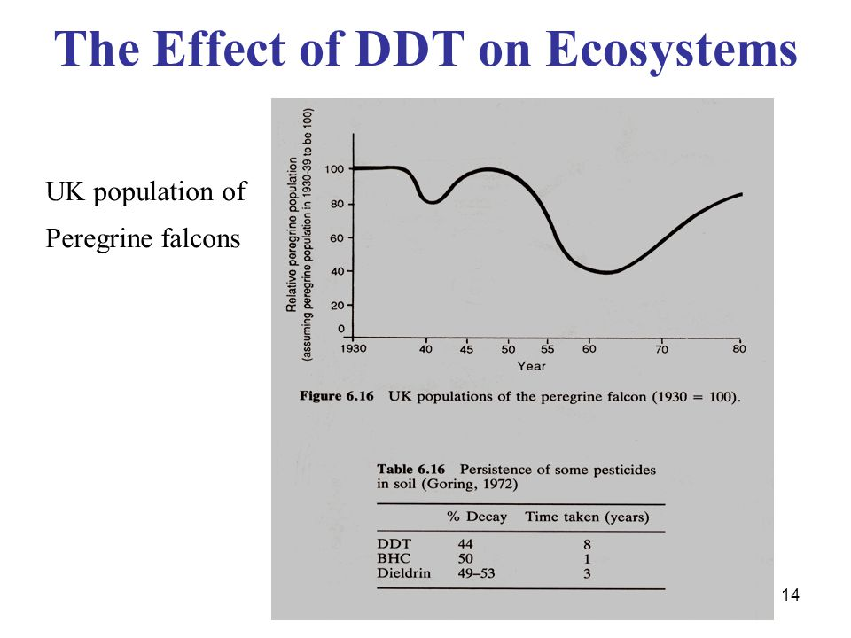 14 The Effect of DDT on Ecosystems UK population of Peregrine falcons