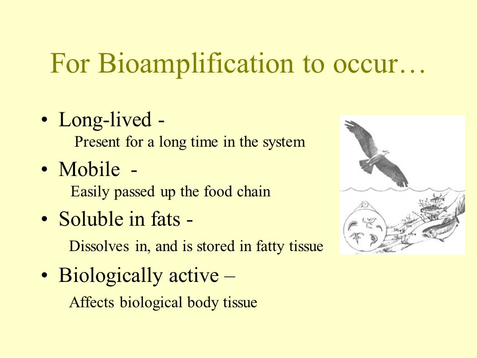 For Bioamplification to occur… Long-lived - Present for a long time in the system Mobile - Easily passed up the food chain Soluble in fats - Dissolves in, and is stored in fatty tissue Biologically active – Affects biological body tissue