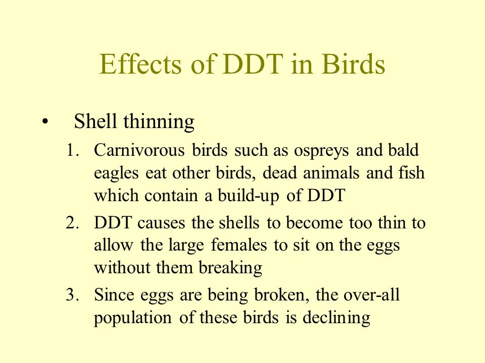 Effects of DDT in Birds Shell thinning 1.Carnivorous birds such as ospreys and bald eagles eat other birds, dead animals and fish which contain a build-up of DDT 2.DDT causes the shells to become too thin to allow the large females to sit on the eggs without them breaking 3.Since eggs are being broken, the over-all population of these birds is declining