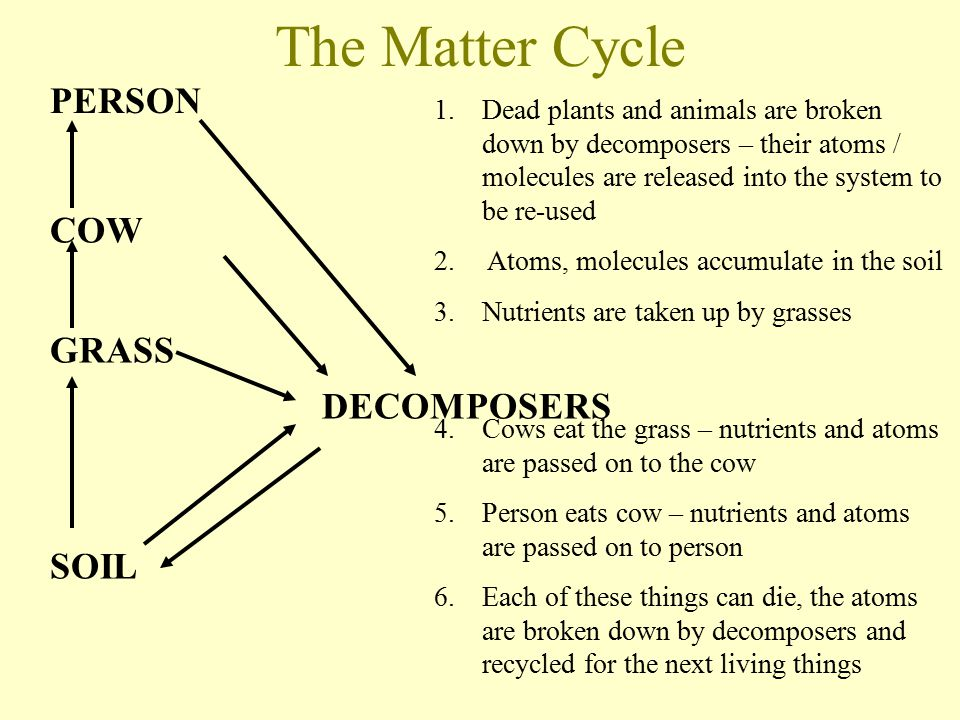 The Matter Cycle PERSON COW GRASS SOIL DECOMPOSERS 1.Dead plants and animals are broken down by decomposers – their atoms / molecules are released into the system to be re-used 2.