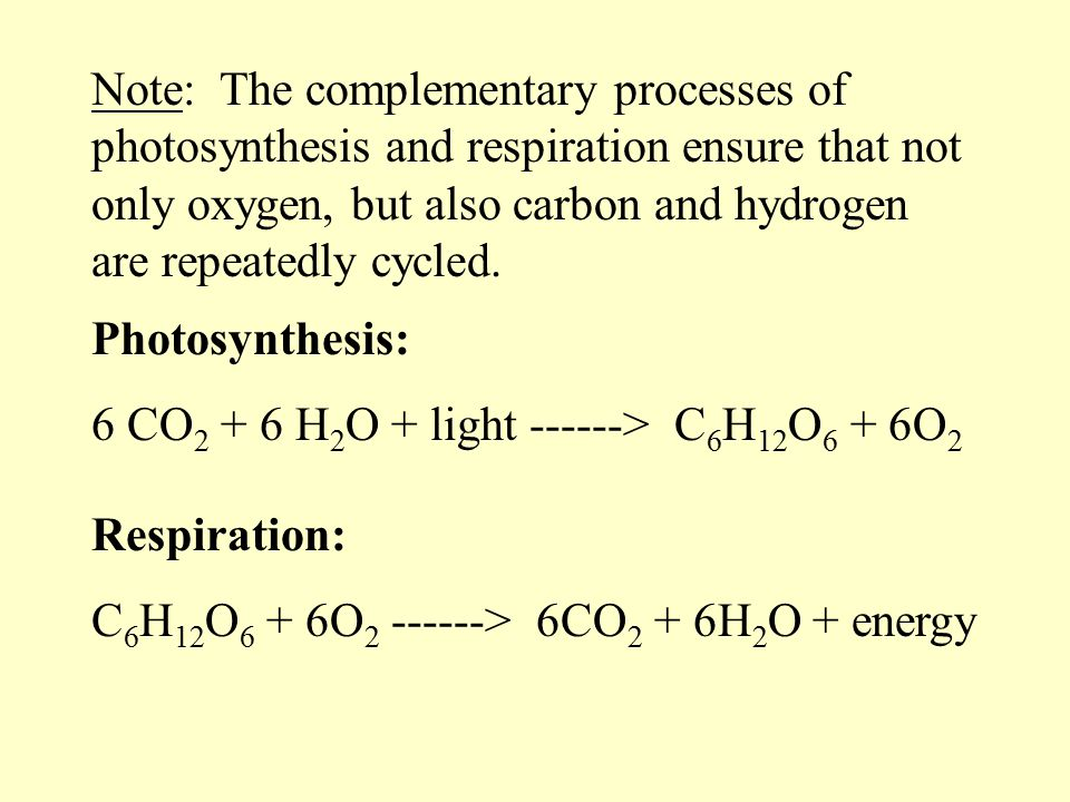 Note: The complementary processes of photosynthesis and respiration ensure that not only oxygen, but also carbon and hydrogen are repeatedly cycled.