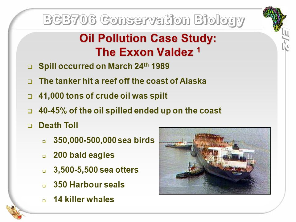   Spill occurred on March 24 th 1989   The tanker hit a reef off the coast of Alaska   41,000 tons of crude oil was spilt   40-45% of the oil spilled ended up on the coast   Death Toll   350,000-500,000 sea birds   200 bald eagles   3,500-5,500 sea otters   350 Harbour seals   14 killer whales Oil Pollution Case Study: The Exxon Valdez 1