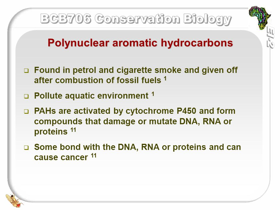   Found in petrol and cigarette smoke and given off after combustion of fossil fuels 1   Pollute aquatic environment 1   PAHs are activated by cytochrome P450 and form compounds that damage or mutate DNA, RNA or proteins 11   Some bond with the DNA, RNA or proteins and can cause cancer 11 Polynuclear aromatic hydrocarbons