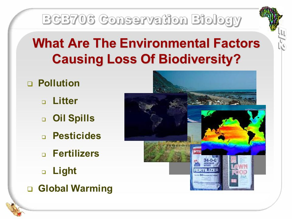   100s of different pesticides exist   Many are worldwide contaminants as they have been carried in the air and water   Have been seen as agent of evolutionary change in some species Pesticides