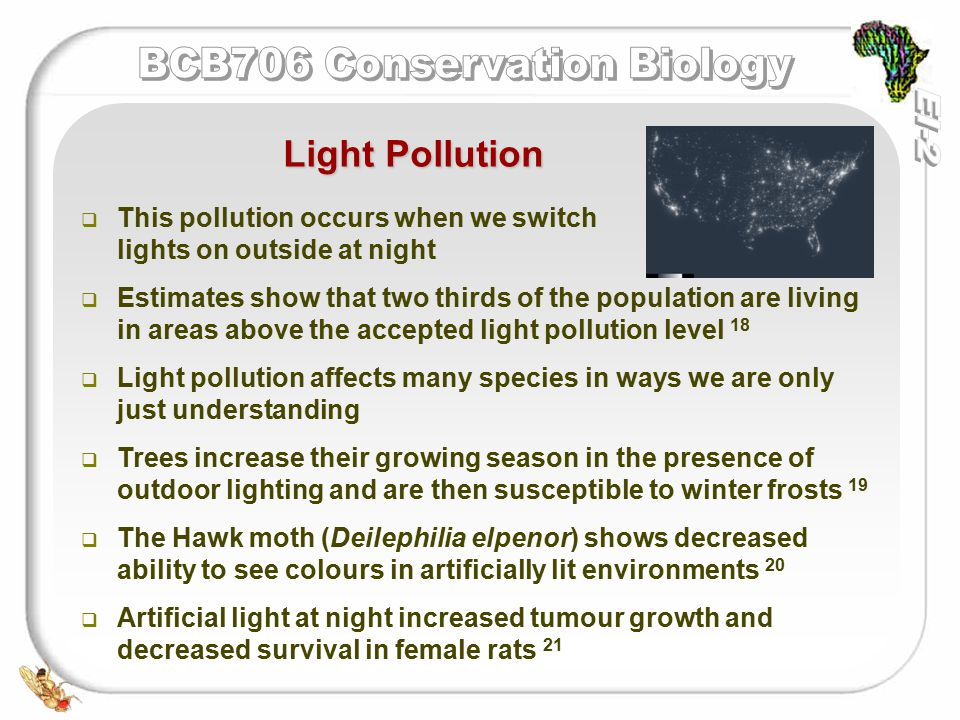   This pollution occurs when we switch lights on outside at night   Estimates show that two thirds of the population are living in areas above the accepted light pollution level 18   Light pollution affects many species in ways we are only just understanding   Trees increase their growing season in the presence of outdoor lighting and are then susceptible to winter frosts 19   The Hawk moth (Deilephilia elpenor) shows decreased ability to see colours in artificially lit environments 20   Artificial light at night increased tumour growth and decreased survival in female rats 21 Light Pollution