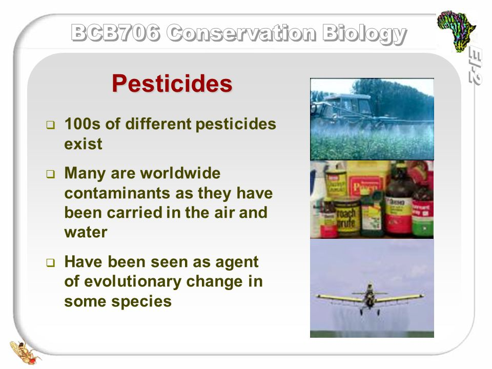   These pesticides all have   Chemical stability   High mobility   High solubility   Toxicity   A well known example of a chlorinated hydrocarbon pesticide is DDT Pesticides: Chlorinated hydrocarbon pesticides (CHs) 1