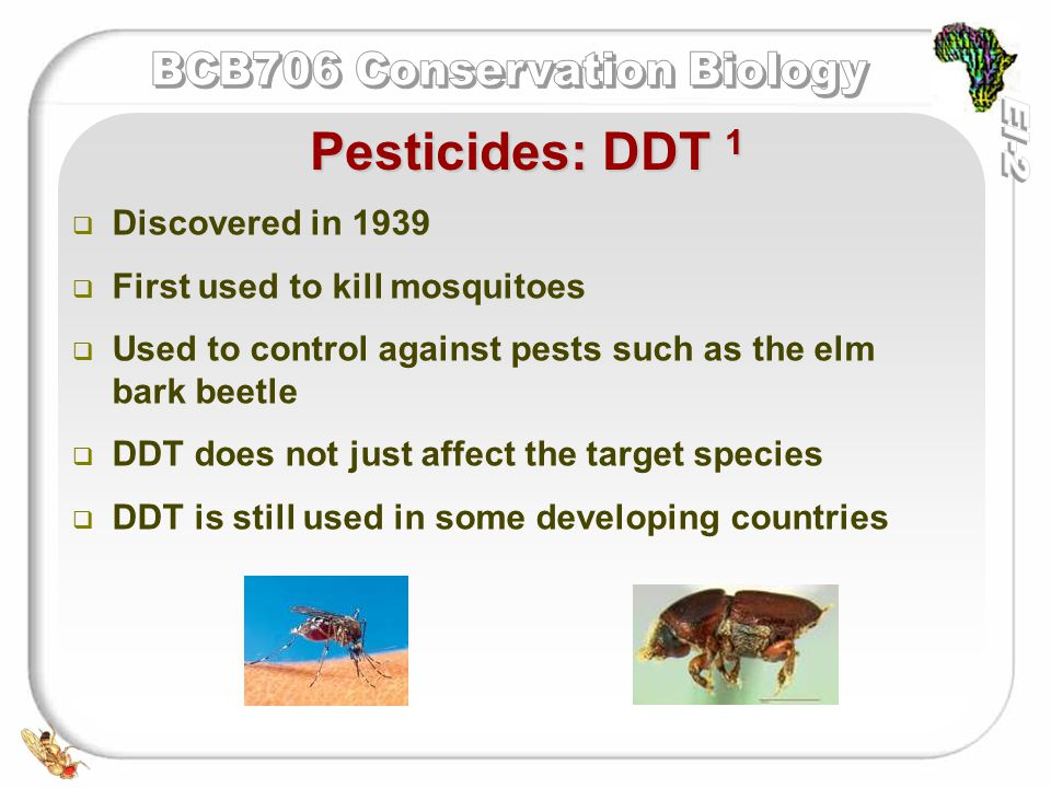   Discovered in 1939   First used to kill mosquitoes   Used to control against pests such as the elm bark beetle   DDT does not just affect the target species   DDT is still used in some developing countries Pesticides: DDT 1
