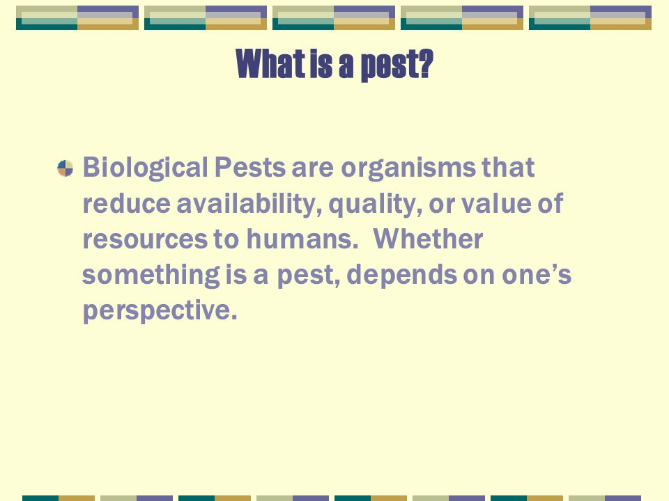 What is a pest.