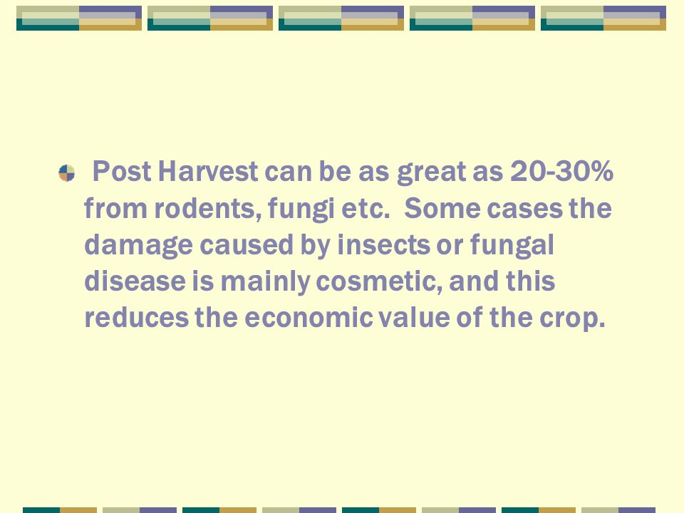 Post Harvest can be as great as 20-30% from rodents, fungi etc.