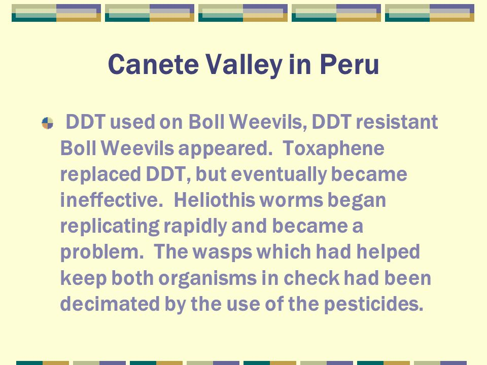 Canete Valley in Peru DDT used on Boll Weevils, DDT resistant Boll Weevils appeared.