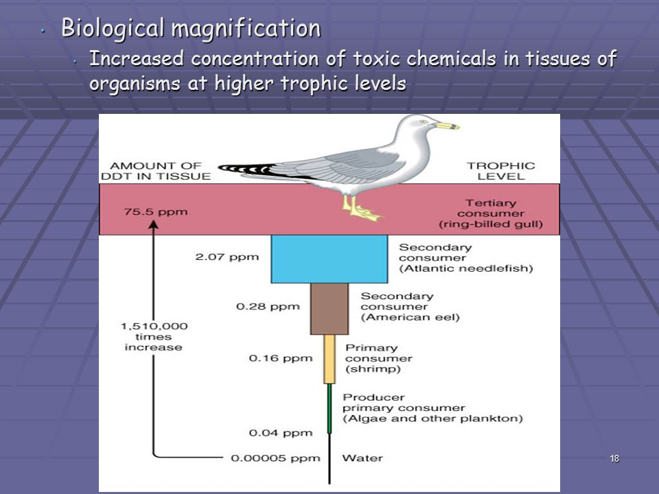 Biological magnification Biological magnification Increased concentration of toxic chemicals in tissues of organisms at higher trophic levels Increase