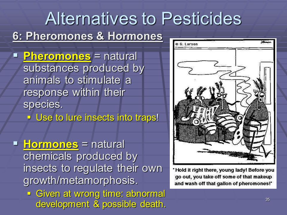 6: Pheromones & Hormones  Pheromones = natural substances produced by animals to stimulate a response within their species.  Use to lure insects int