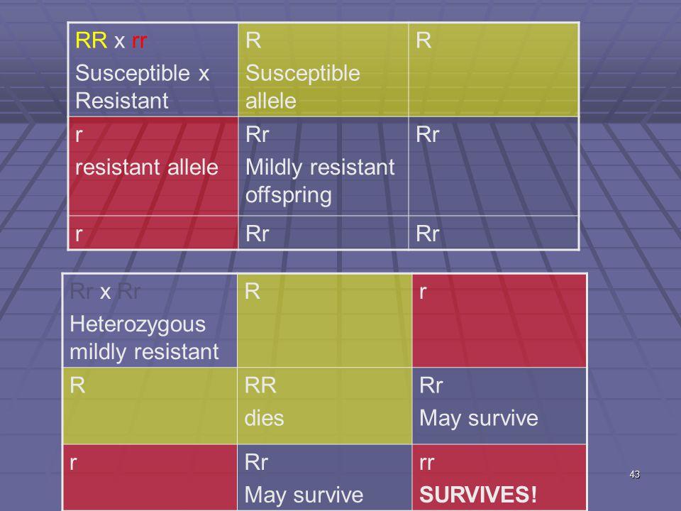43 RR x rr Susceptible x Resistant R Susceptible allele R r resistant allele Rr Mildly resistant offspring Rr r Rr x Rr Heterozygous mildly resistant Rr RRR dies Rr May survive rRr May survive rr SURVIVES!