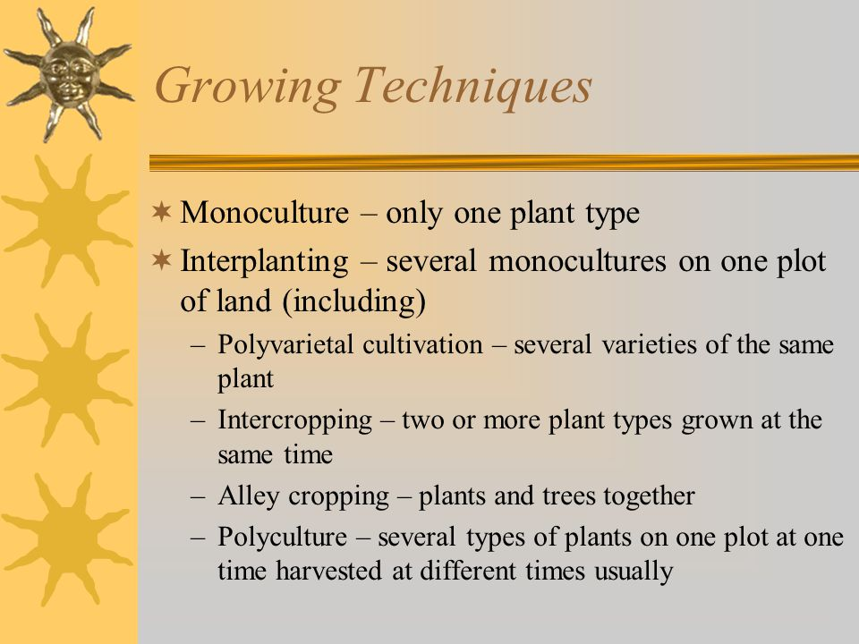 Growing Techniques  Monoculture – only one plant type  Interplanting – several monocultures on one plot of land (including) –Polyvarietal cultivation – several varieties of the same plant –Intercropping – two or more plant types grown at the same time –Alley cropping – plants and trees together –Polyculture – several types of plants on one plot at one time harvested at different times usually