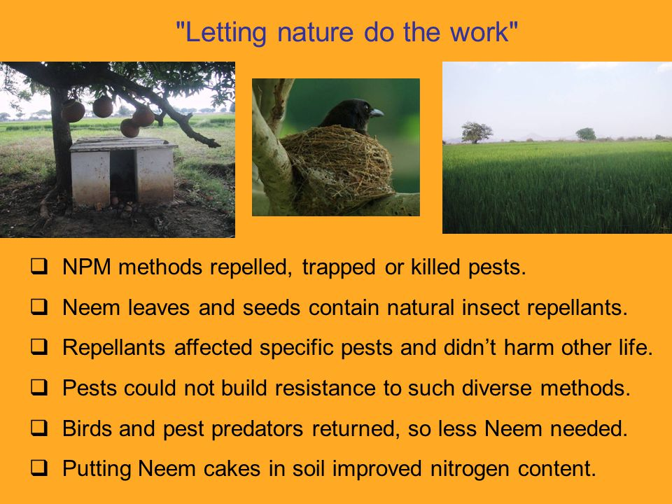 Letting nature do the work  NPM methods repelled, trapped or killed pests.