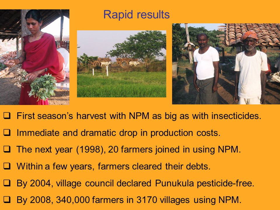 Rapid results  First season's harvest with NPM as big as with insecticides.