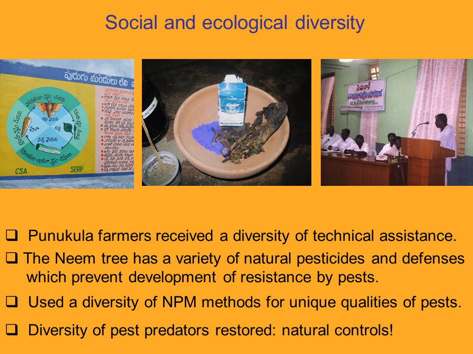 Social and ecological diversity  Punukula farmers received a diversity of technical assistance.