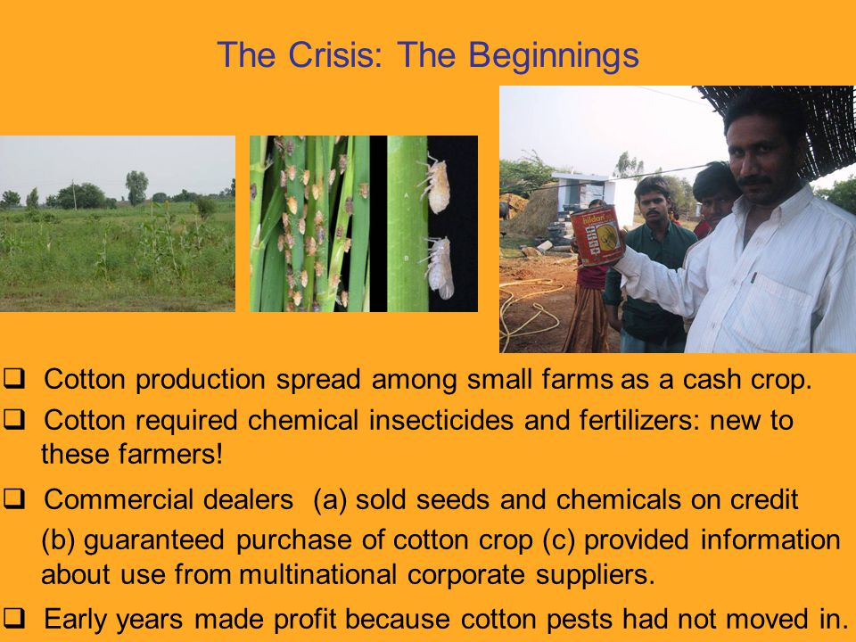 The Crisis: The Trap  Cotton pests plagued fields, requiring regular spraying.