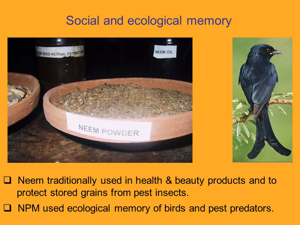 Social and ecological memory  Neem traditionally used in health & beauty products and to protect stored grains from pest insects.