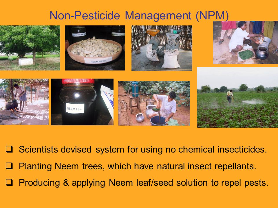 Rapid results  First season's harvest with NPM as big as with insecticides.