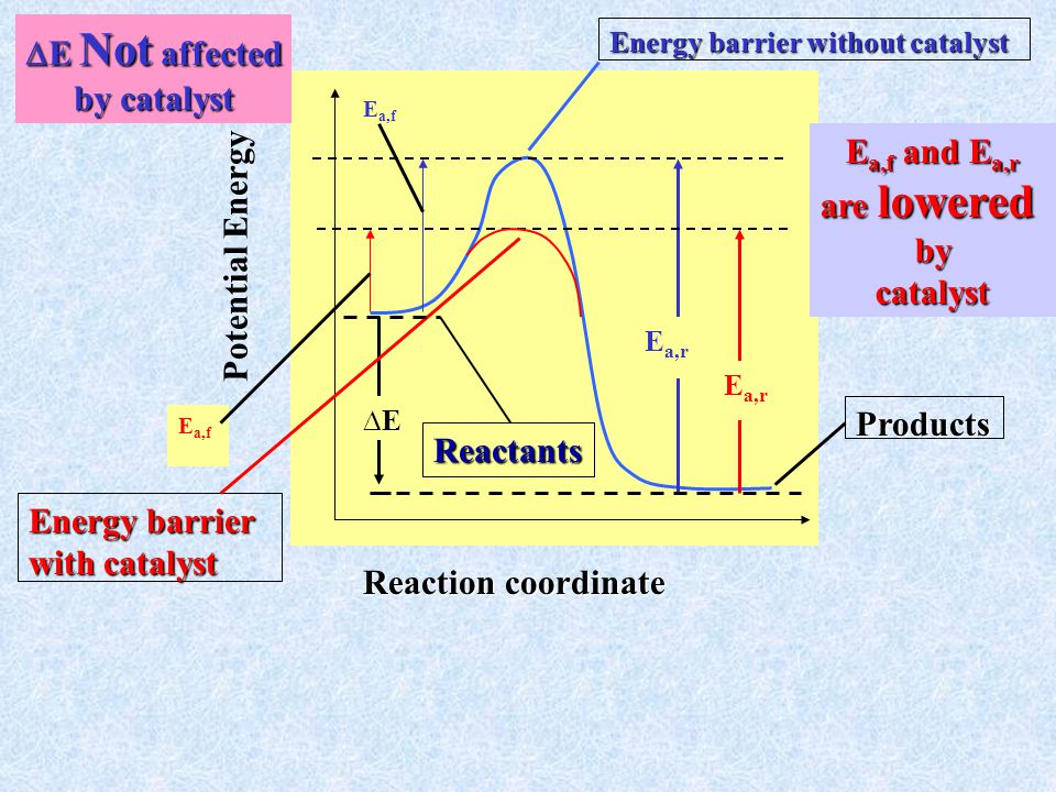E a, f Reaction coordinate Potential Energy Energy barrier without catalyst Energy barrier with catalyst ∆E E a,r Products E a,f Reactants  E Not affected by catalyst E a,f and E a,r are lowered bycatalyst
