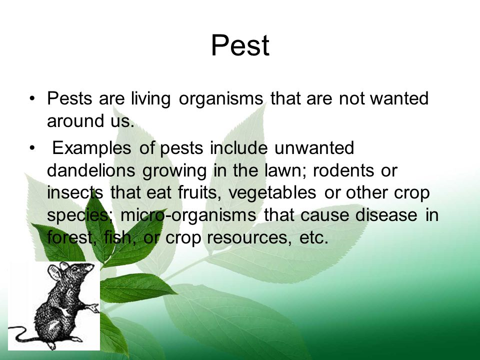 Pest Pests are living organisms that are not wanted around us.