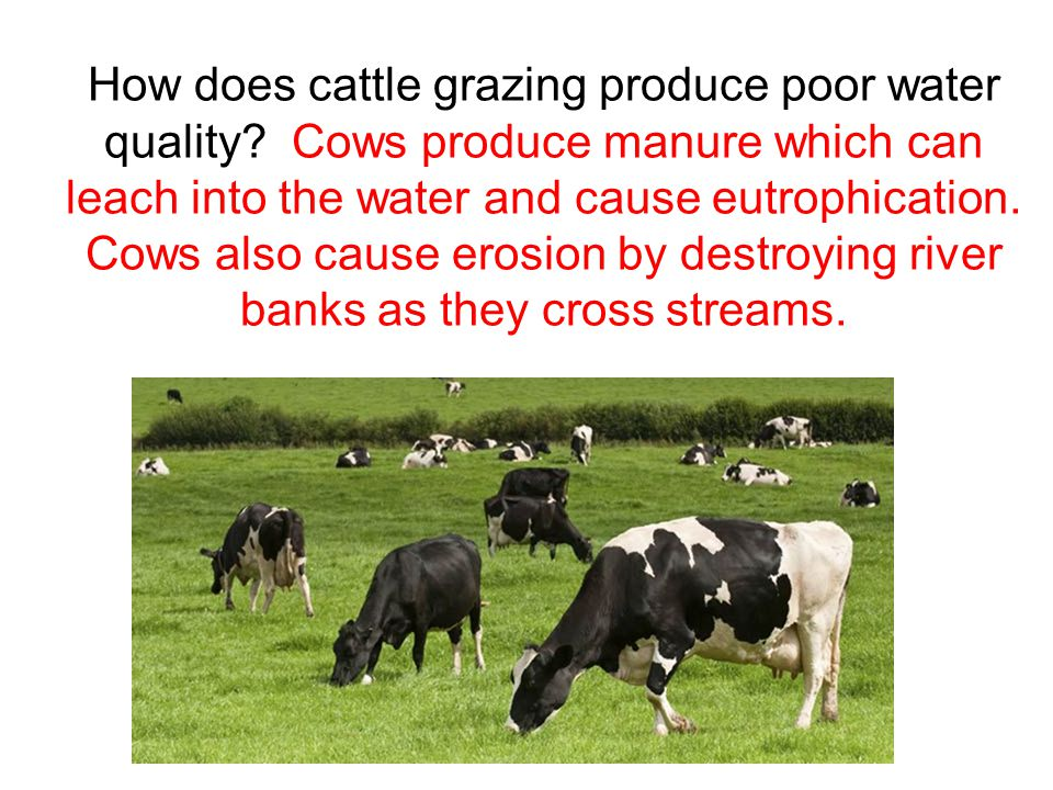 How does cattle grazing produce poor water quality.