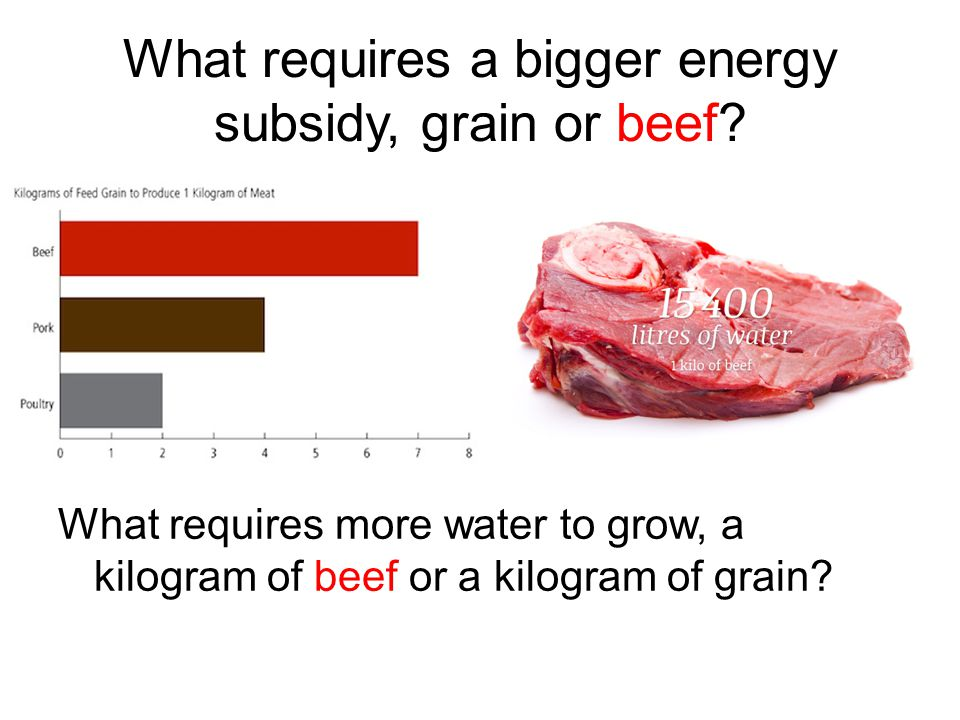 What requires a bigger energy subsidy, grain or beef.