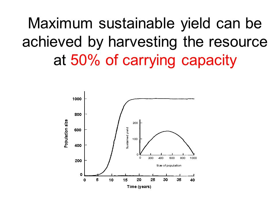 Maximum sustainable yield can be achieved by harvesting the resource at 50% of carrying capacity
