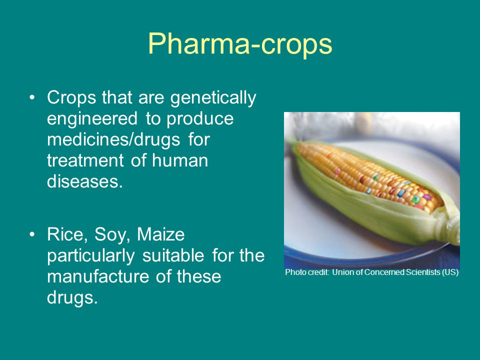 Pharma-crops Crops that are genetically engineered to produce medicines/drugs for treatment of human diseases.