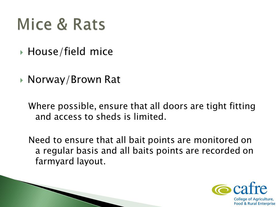  House/field mice  Norway/Brown Rat Where possible, ensure that all doors are tight fitting and access to sheds is limited. Need to ensure that all