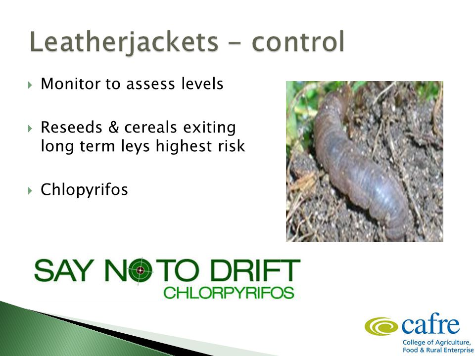  Monitor to assess levels  Reseeds & cereals exiting long term leys highest risk  Chlopyrifos