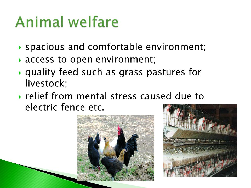 The mission of agriculture is not only to produce enough food, but also to take account the effects to the:  environment;  human health;  animal welfare;  social and regional development.