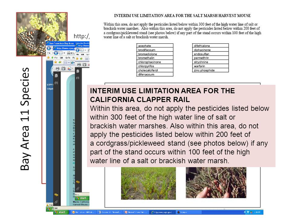 Status Notes http://www.epa.gov/oppfead1/endanger/litstatus/stipulated-injuc.html INTERIM USE LIMITATION AREA FOR THE CALIFORNIA CLAPPER RAIL Within this area, do not apply the pesticides listed below within 300 feet of the high water line of salt or brackish water marshes.