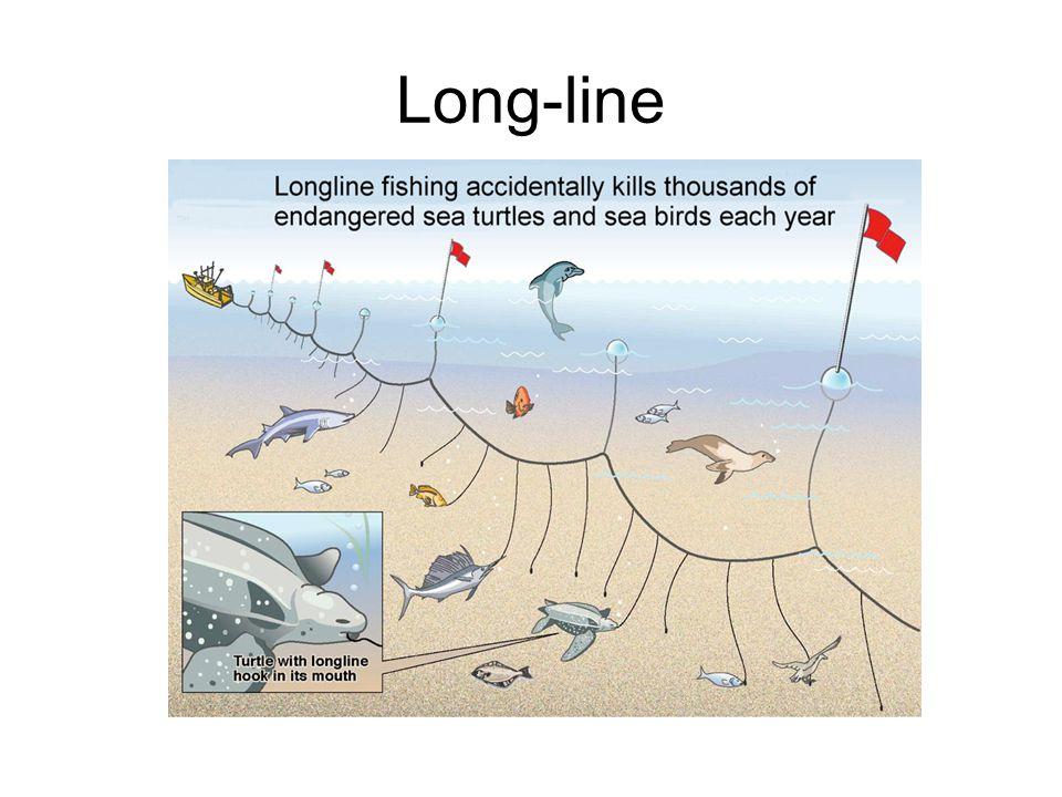 Long-line