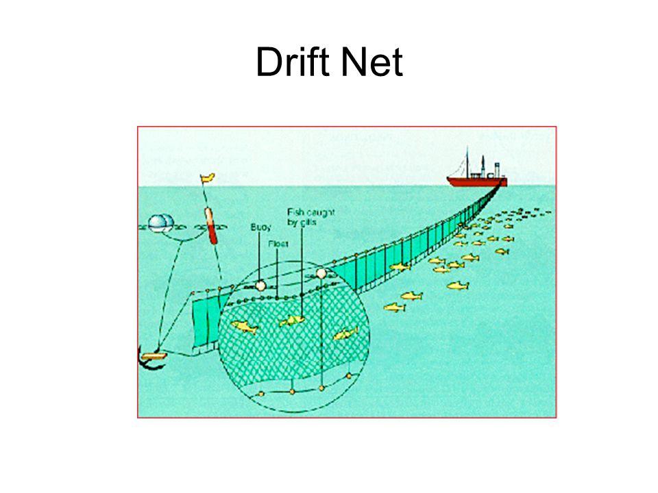 Drift Net