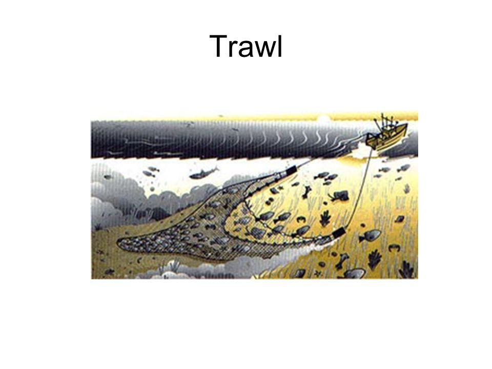 Trawl
