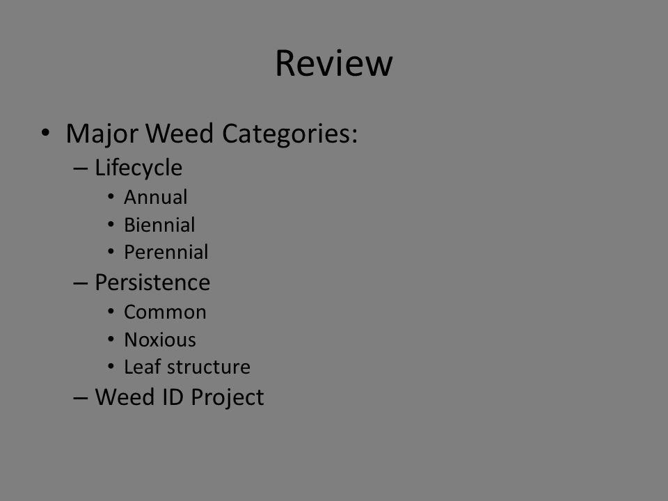 Review Major Weed Categories: – Lifecycle Annual Biennial Perennial – Persistence Common Noxious Leaf structure – Weed ID Project