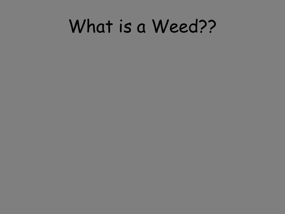 What is a Weed??