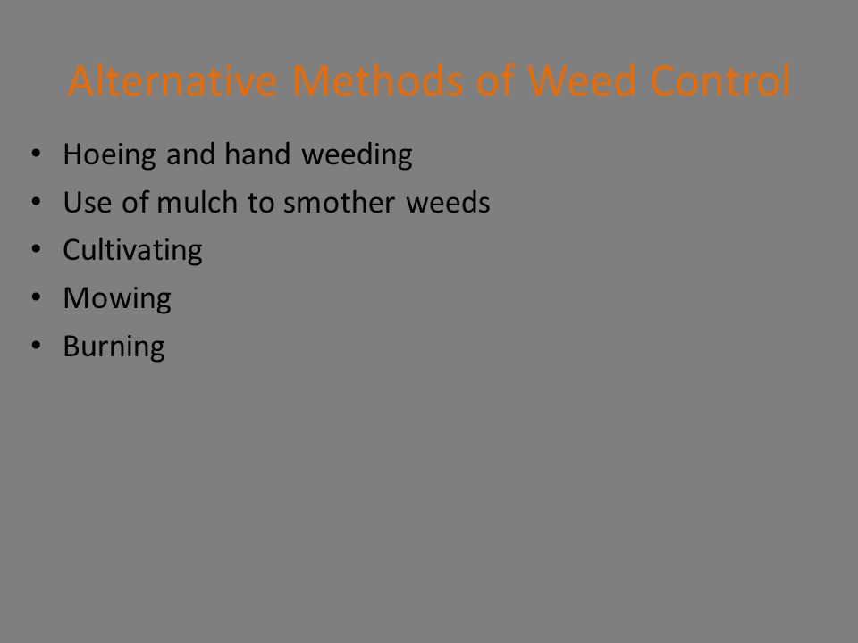 Alternative Methods of Weed Control Hoeing and hand weeding Use of mulch to smother weeds Cultivating Mowing Burning