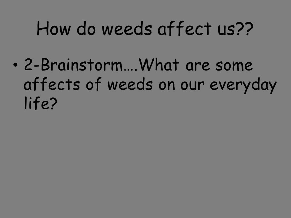 How do weeds affect us?? 2-Brainstorm….What are some affects of weeds on our everyday life?