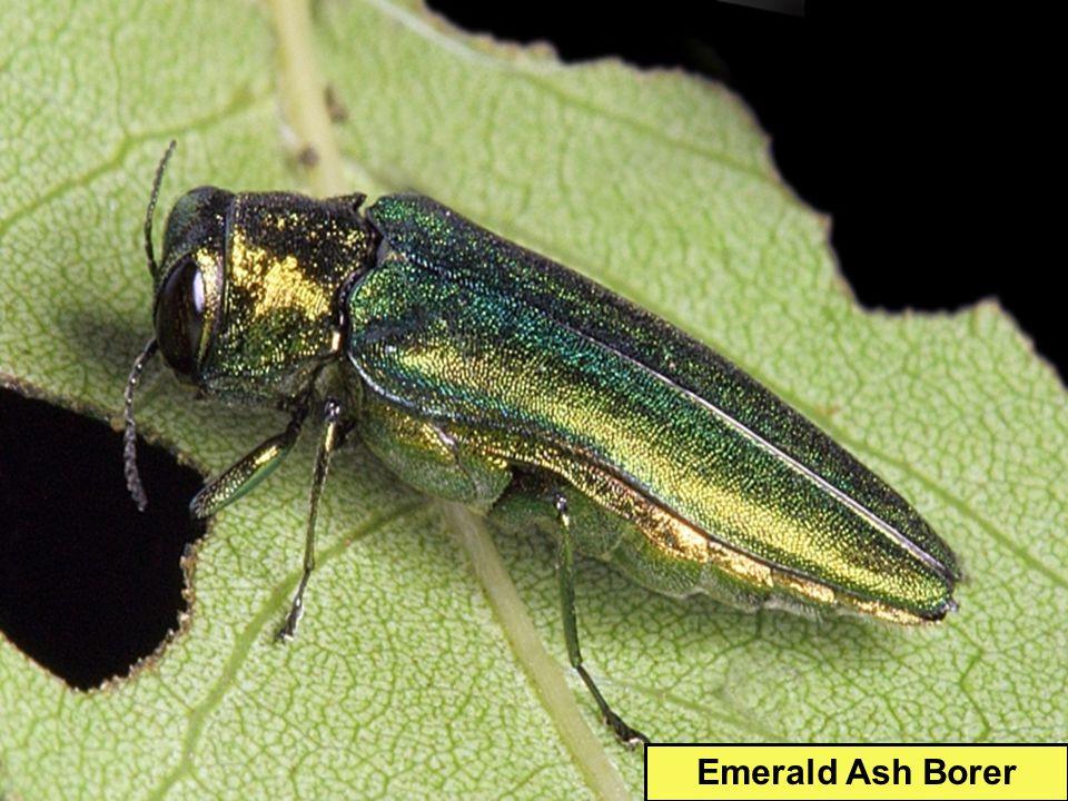 Pesticides Kill pests (undesirable orgs) Insecticides: kills insects Herbicides: kills weeds Fungicides: kills fungus Nematocides: kills worms Rodenticides: kills rodents RoundUp: Herbicide Raid: Insecticide D-Con: Rodenticide