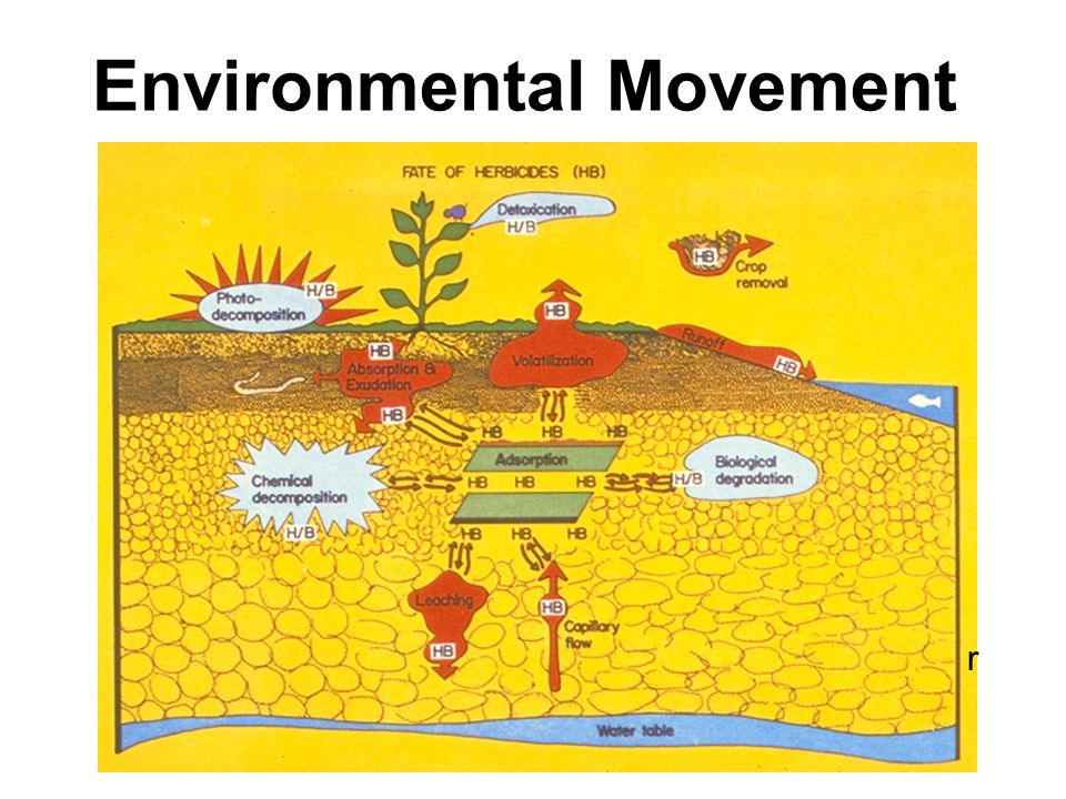 Environmental Movement r