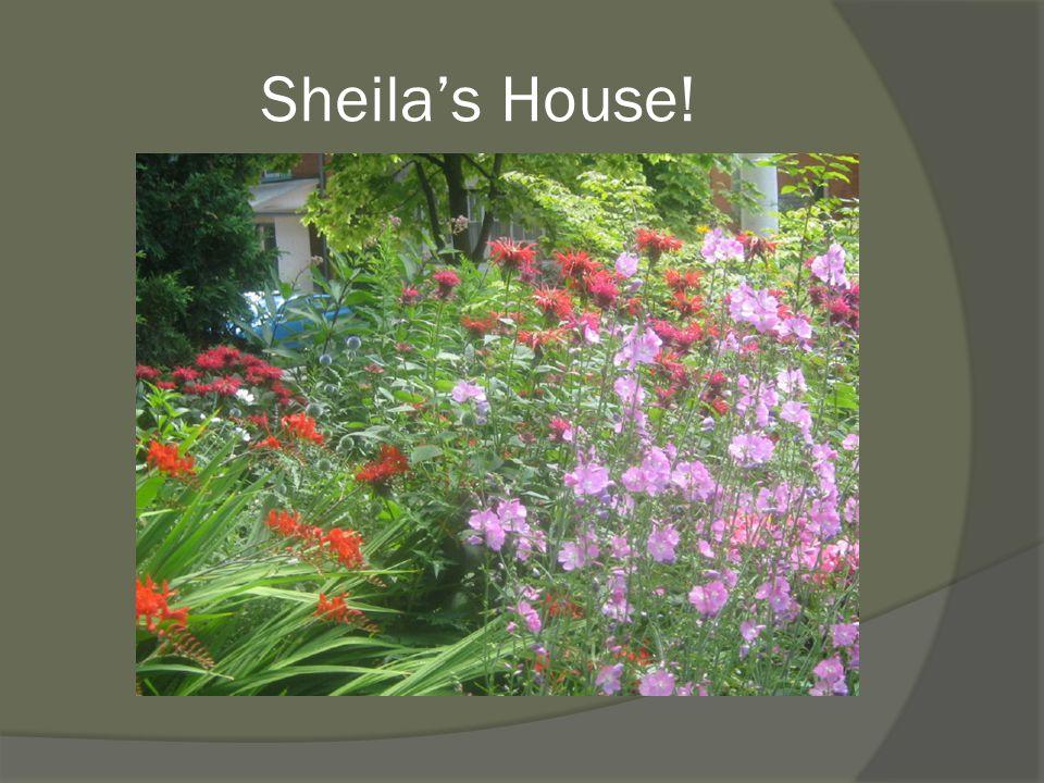 Sheila's House!