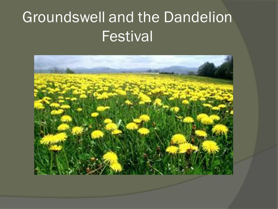 Groundswell and the Dandelion Festival