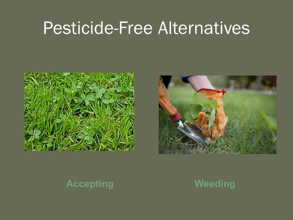 Pesticide-Free Alternatives Accepting Weeding