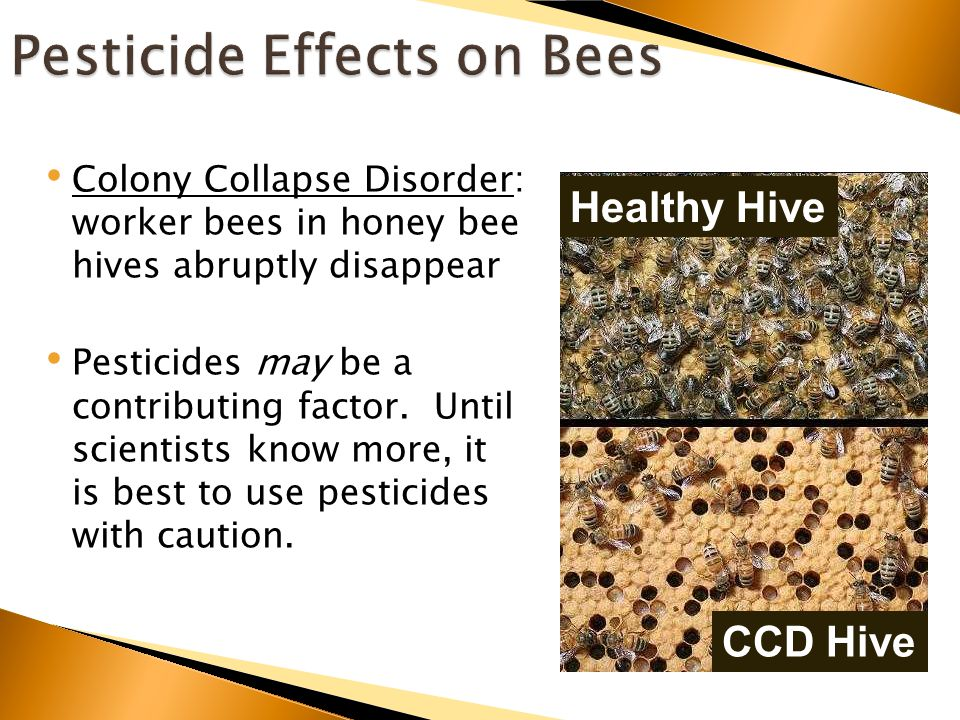 Colony Collapse Disorder: worker bees in honey bee hives abruptly disappear Pesticides may be a contributing factor.