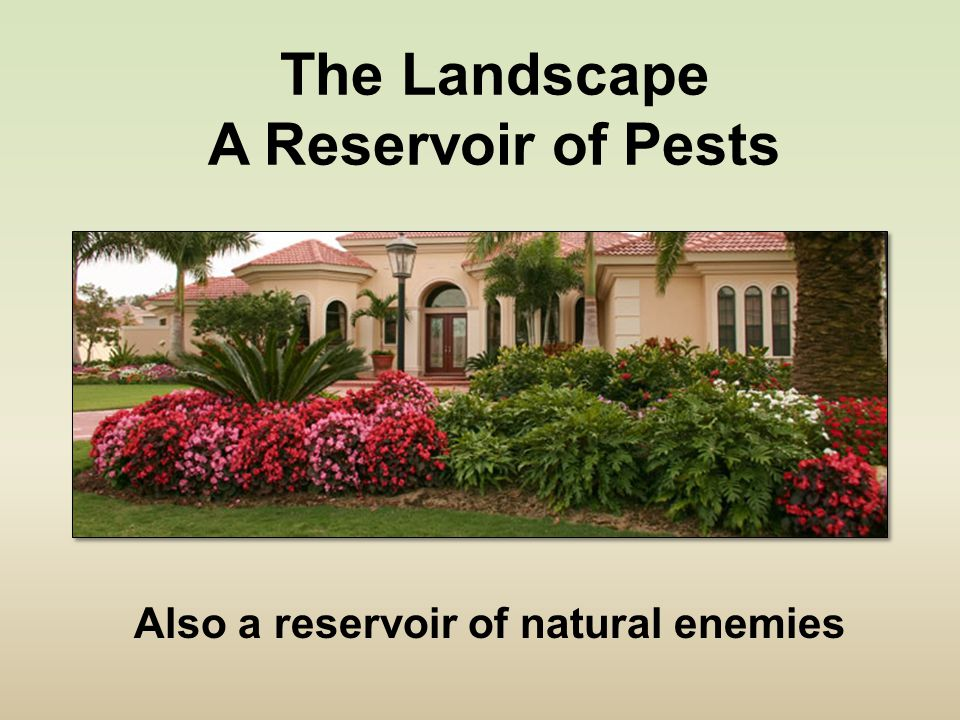 The Landscape A Reservoir of Pests Also a reservoir of natural enemies