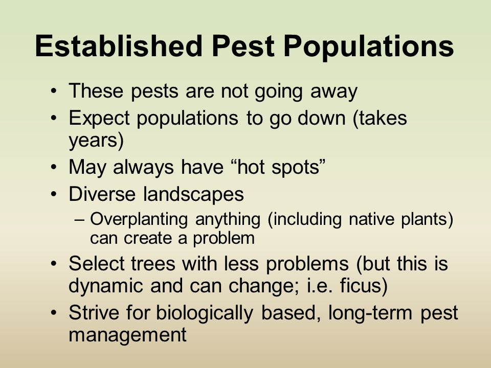Established Pest Populations These pests are not going away Expect populations to go down (takes years) May always have hot spots Diverse landscapes –Overplanting anything (including native plants) can create a problem Select trees with less problems (but this is dynamic and can change; i.e.
